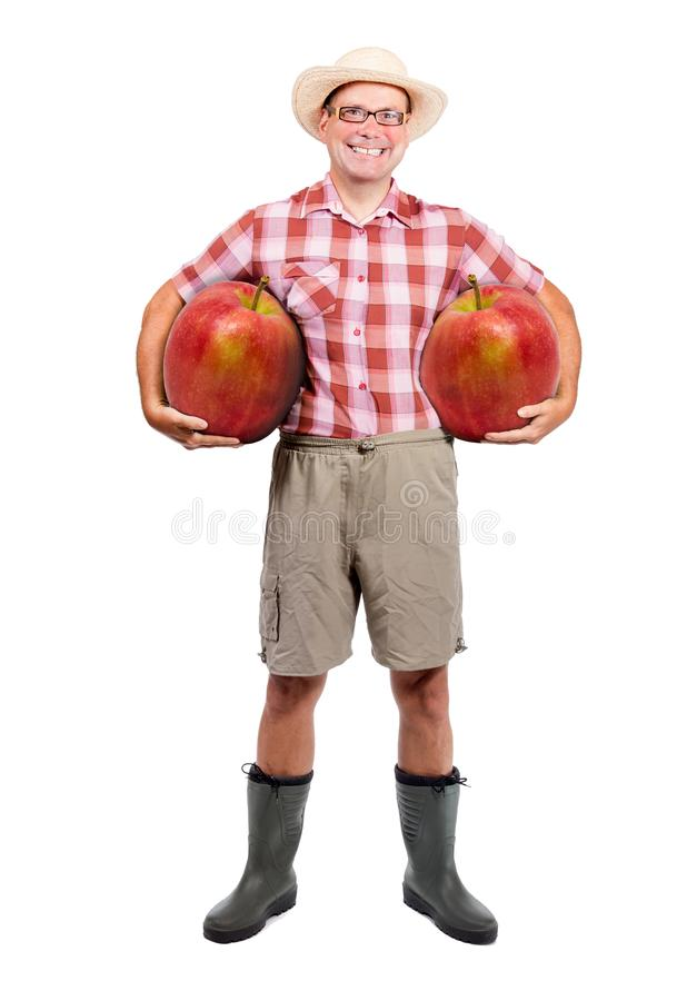 Gardener holding two red apple royalty free stock photography