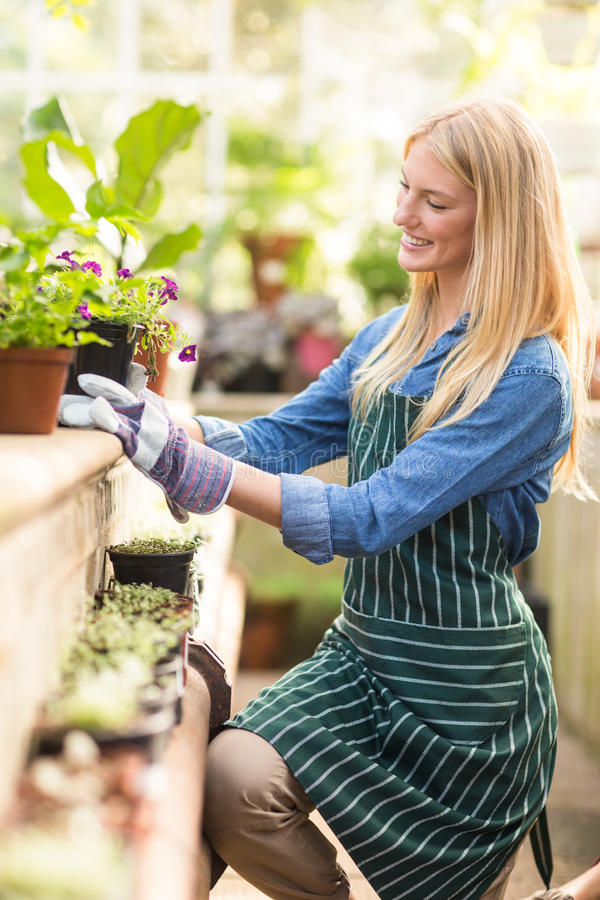 Gardener keeping potted plant on retaining wall royalty free stock photos
