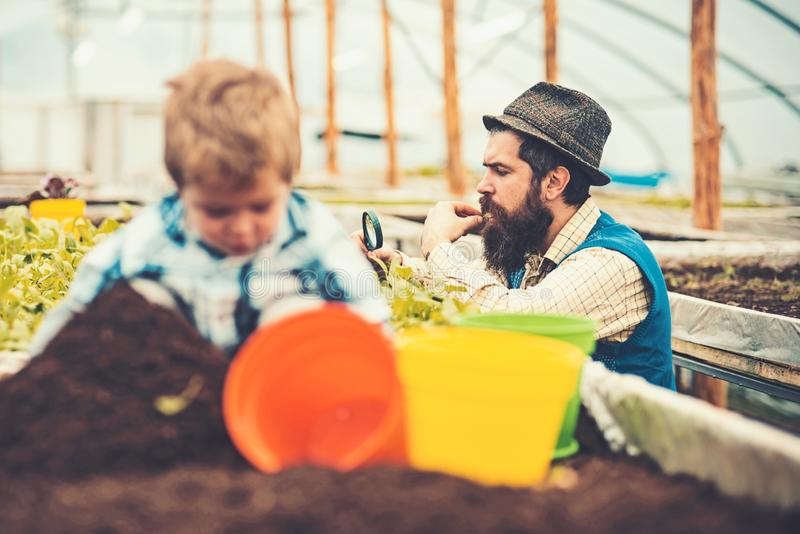 Gardener looking at his harvest through magnifying glass. Side view bearded man in blue vest, yellow shirt and fedora. Gardener looking at his harvest through royalty free stock image