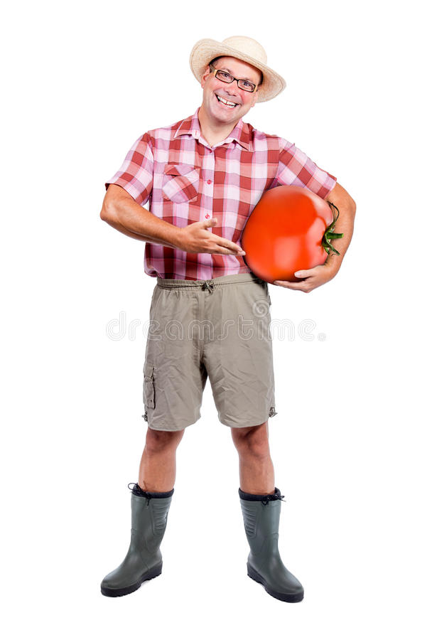 Gardener offers large red tomato royalty free stock photos