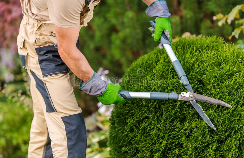 Gardener Pruning And Shaping Bushes royalty free stock photography