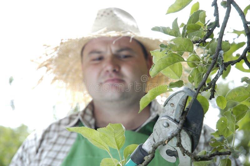 Gardener: pruning shears royalty free stock photography