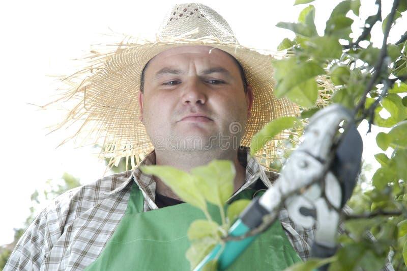 Gardener: pruning shears royalty free stock photo