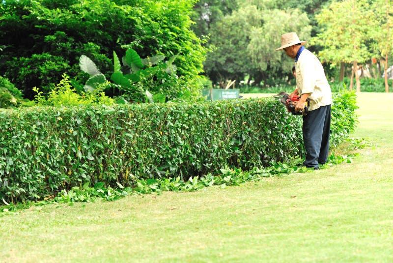 Gardener pruning tree. S with electric motor saw at honghu park,shenzhen city,china may 24,2012 stock image