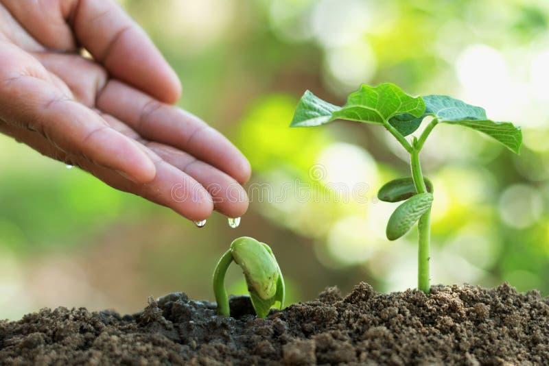 gardener& x27; s hand het water geven stock afbeelding