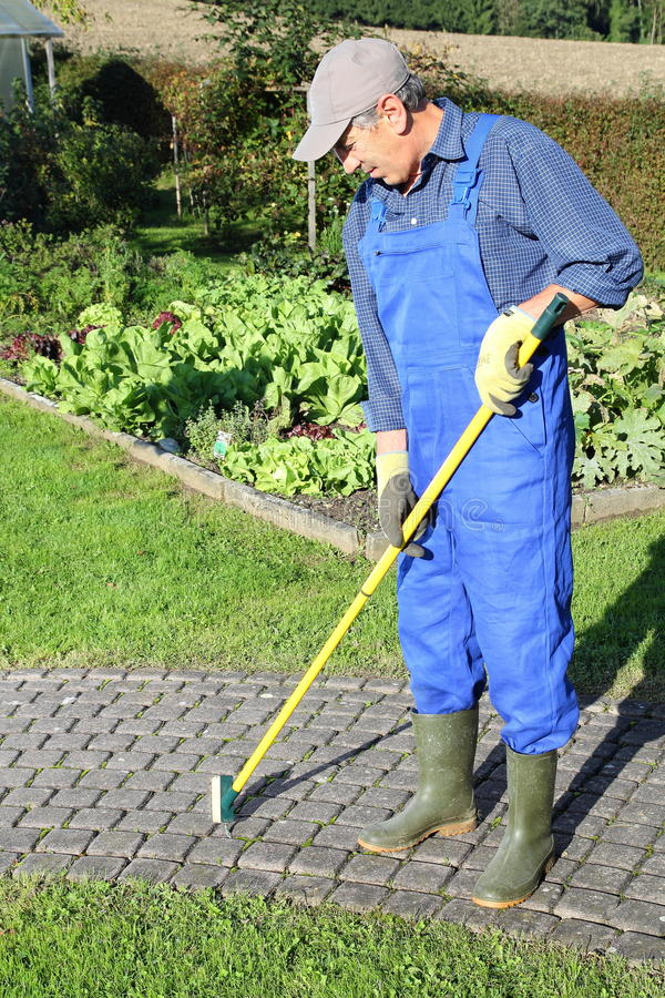 Gardener scratching moss out of paving stone gabs. A Gardener scratching moss out of paving stone gabs stock photo