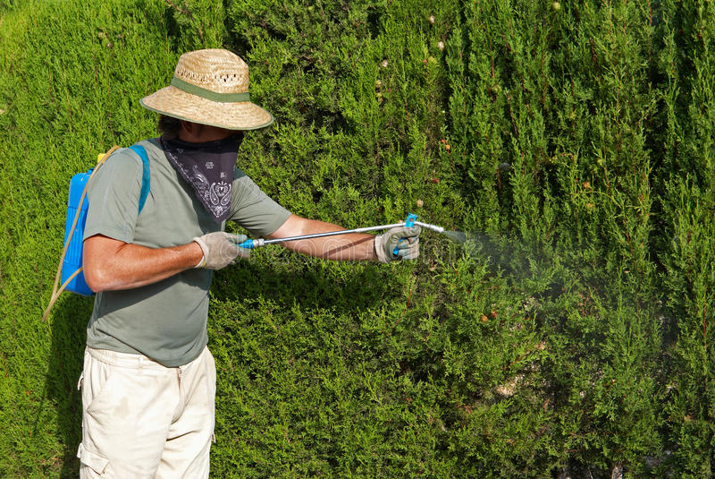Gardener spraying pesticide stock photography