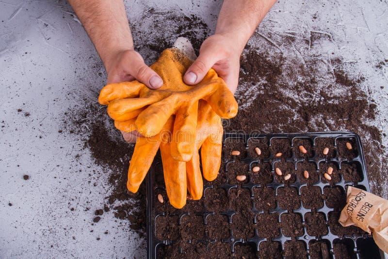 Gardener terminou o trabalho e tirou luvas fotos de stock