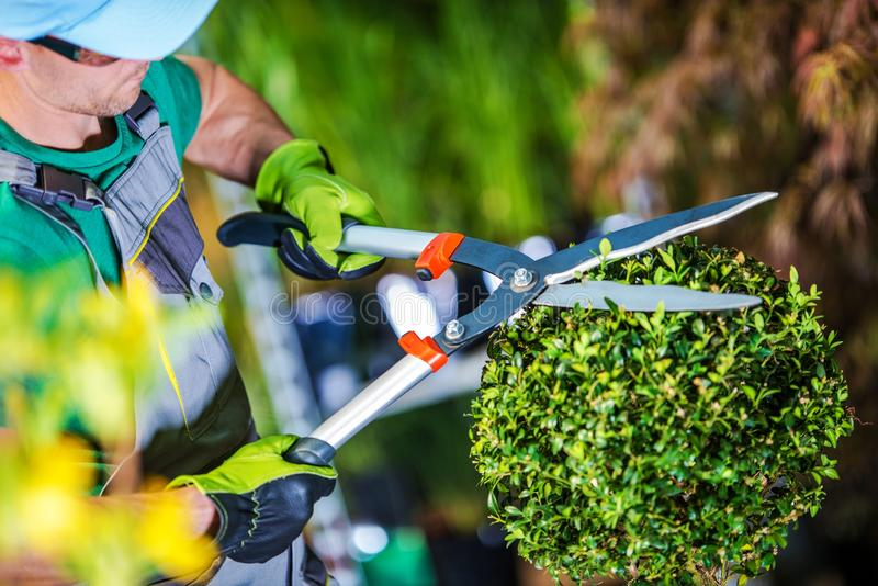 Gardener Trimming Plants stock image