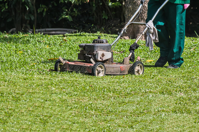 The gardener is using a lawn mower royalty free stock photo