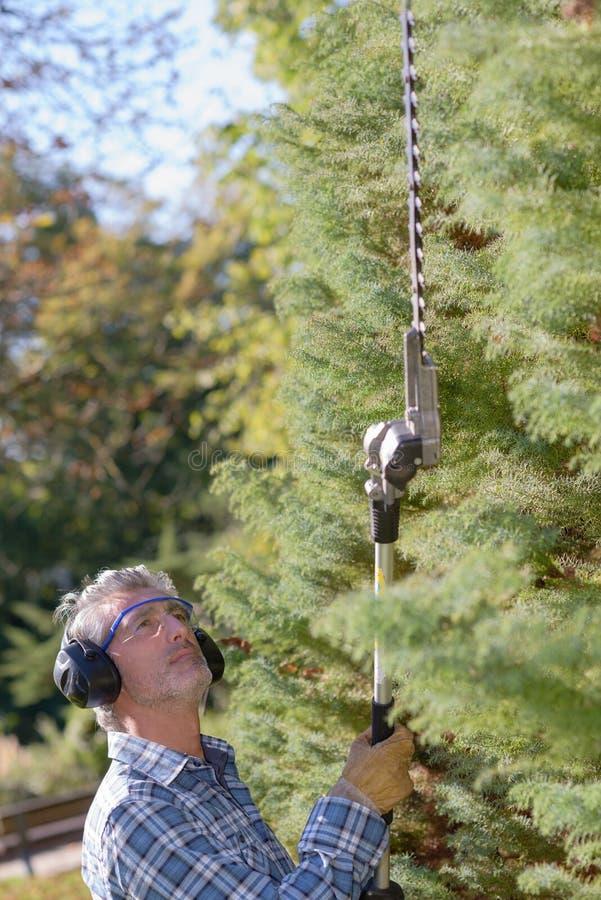 Gardener using long reach hedge trimmer stock image