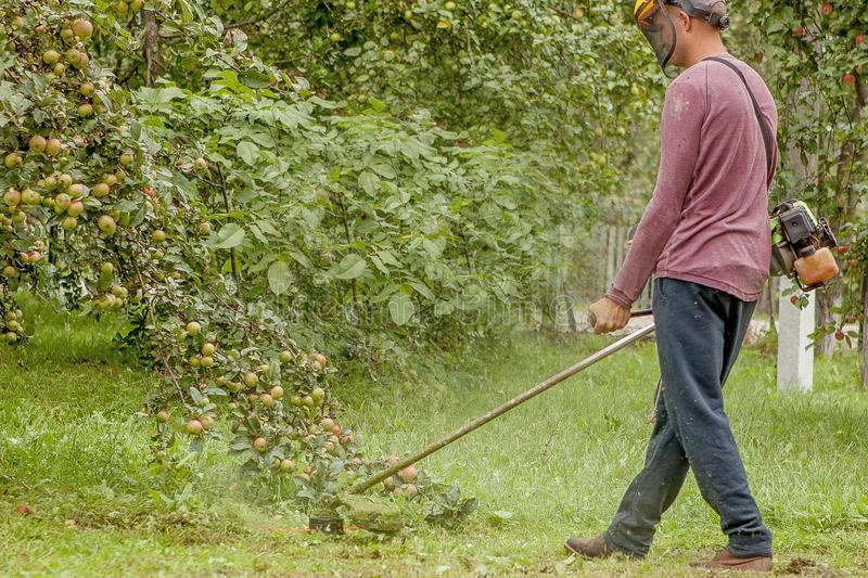 Gardener using machine cutting green grass in garden. Garden equipment. Young man mowing the grass with a trimmer royalty free stock photography