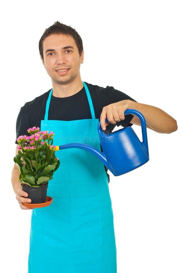 Gardener watering stock photography