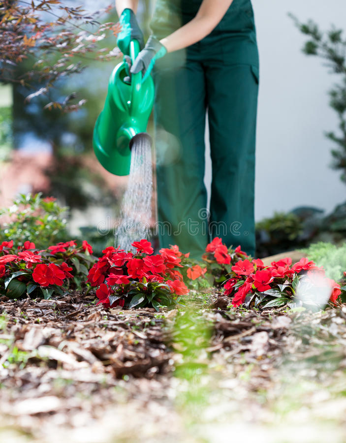 Gardener watering flowers royalty free stock photo