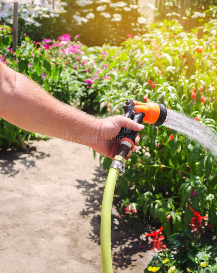 A gardener with a watering hose and a sprayer water the flowers in the garden on a summer sunny day. Sprinkler hose for irrigation. Plants. Gardening, growing stock photos