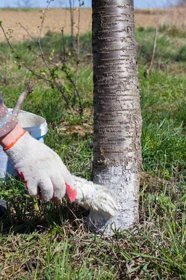 Free Gardener Whitening Tree Trunk Stock Photo - 53093240