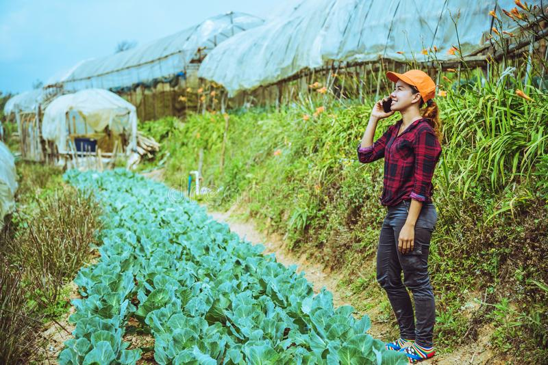 Gardener woman asian. Caring for Vegetable Cabbage In the garden at the nursery royalty free stock photography