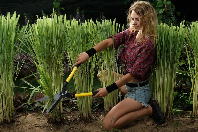Gardener woman stock photo