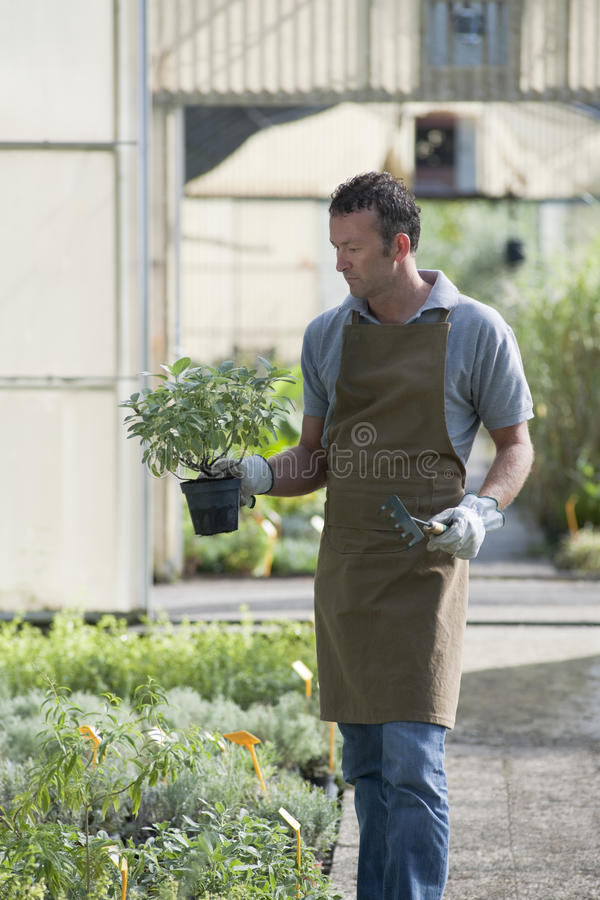 Download Gardener at work stock image. Image of professional, holding - 17215747