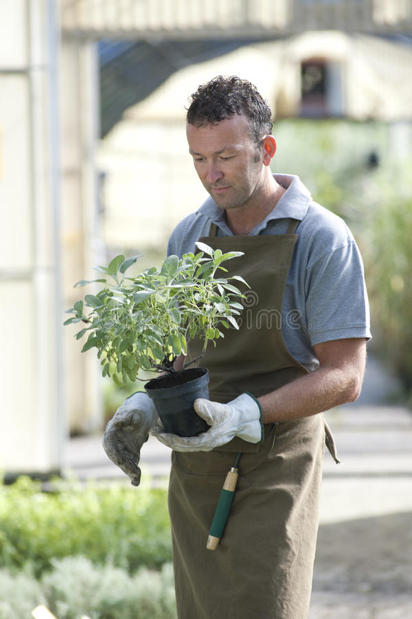 Download Gardener At Work Stock Photography - Image: 17215932