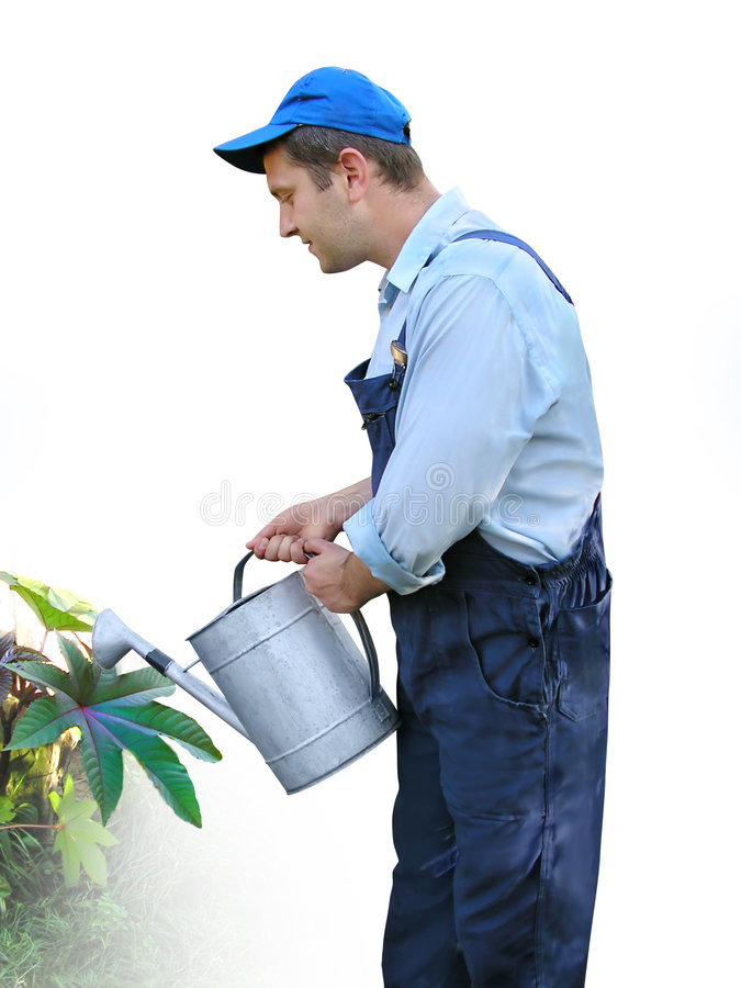 Gardener - worker in working clothes, watering plants with watering can royalty free stock images