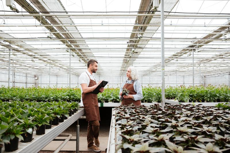 Gardeners talking about plants in greenhouse stock photography