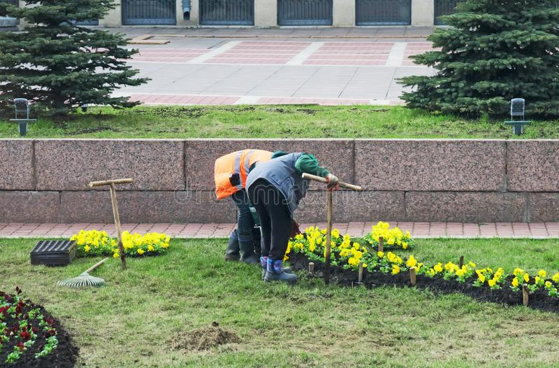 The gardeners planting flowers. stock images