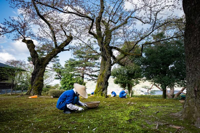 Gardeners working in Kenrokuen garden one of the most beautiful landscape gardens in Japan, Locate in Kanazawa city. Gardeners working in Kenrokuen garden one of royalty free stock photography