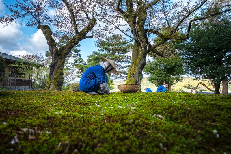 Gardeners working in Kenrokuen garden one of the most beautiful landscape gardens in Japan, Locate in Kanazawa city. Gardeners working in Kenrokuen garden one of royalty free stock photo