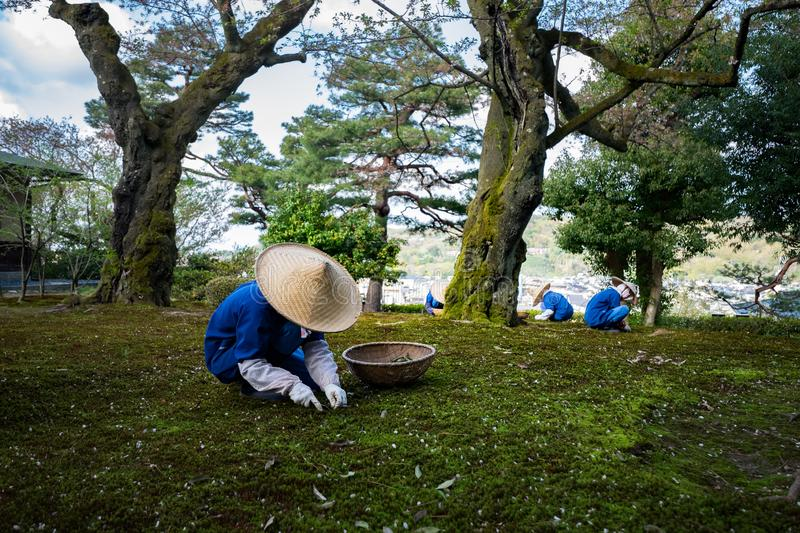 Gardeners working in Kenrokuen garden one of the most beautiful landscape gardens in Japan, Locate in Kanazawa city. Gardeners working in Kenrokuen garden one of royalty free stock image