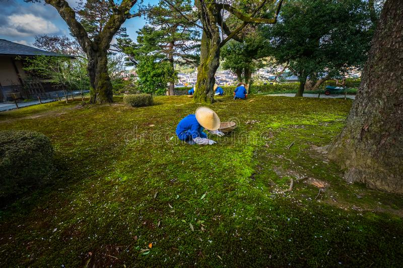 Gardeners working in Kenrokuen garden one of the most beautiful landscape gardens in Japan, Locate in Kanazawa city. Gardeners working in Kenrokuen garden one of stock photos