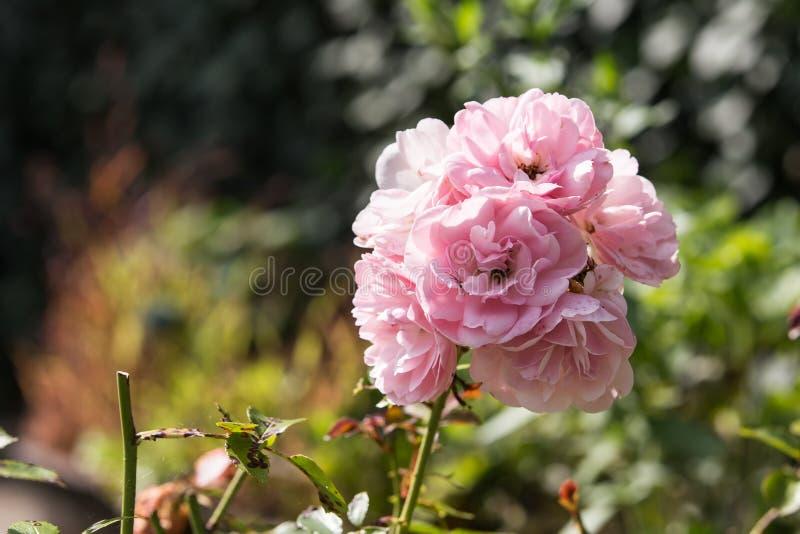 Gardenflowers royalty free stock photos