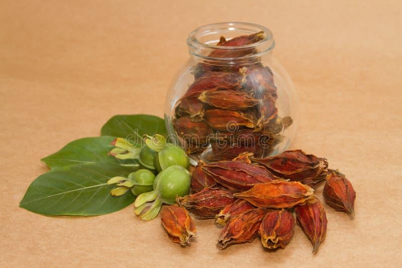 Gardenia Fruit, phytothérapie chinoise photographie stock