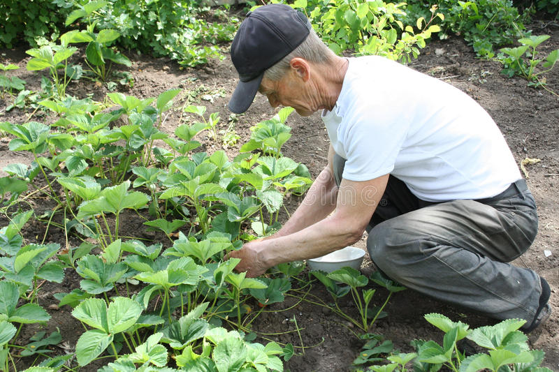 Download Gardening stock image. Image of male, active, nature - 10070869