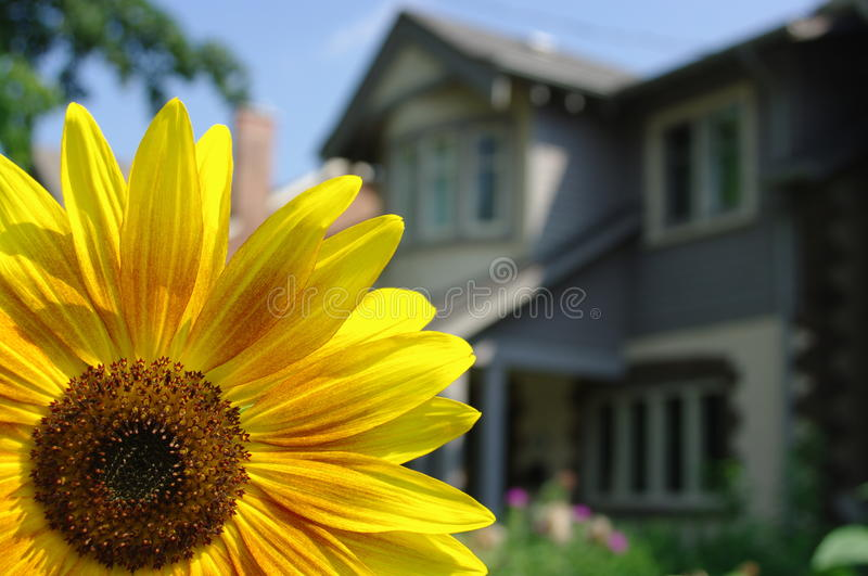 Download Gardening stock image. Image of flower, house, plant - 11238427
