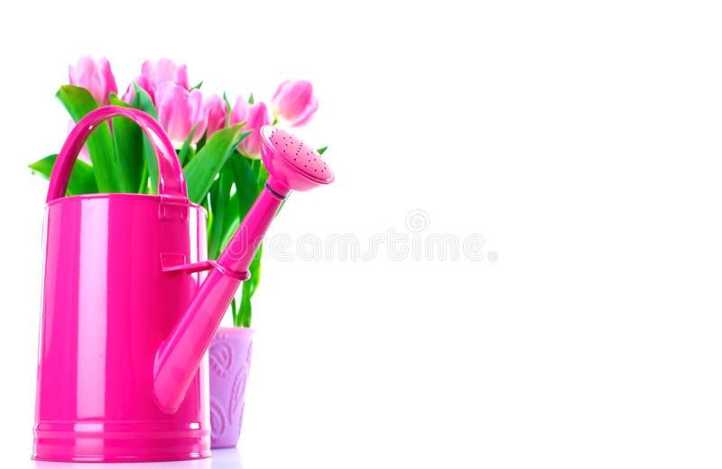 Download Gardening. stock photo. Image of white, growth, foliage - 12859768
