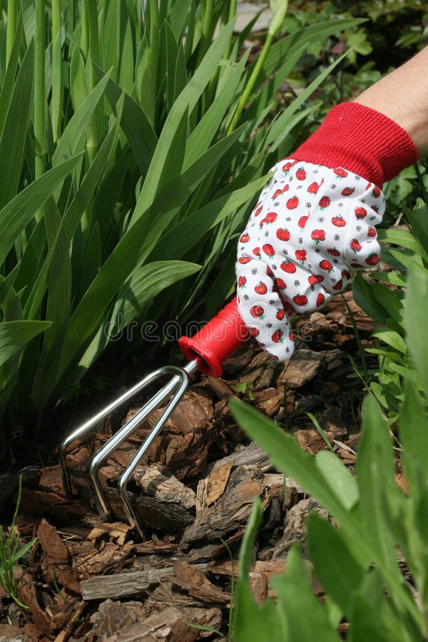Gardening. Gloved hand with gardening grapple royalty free stock photography