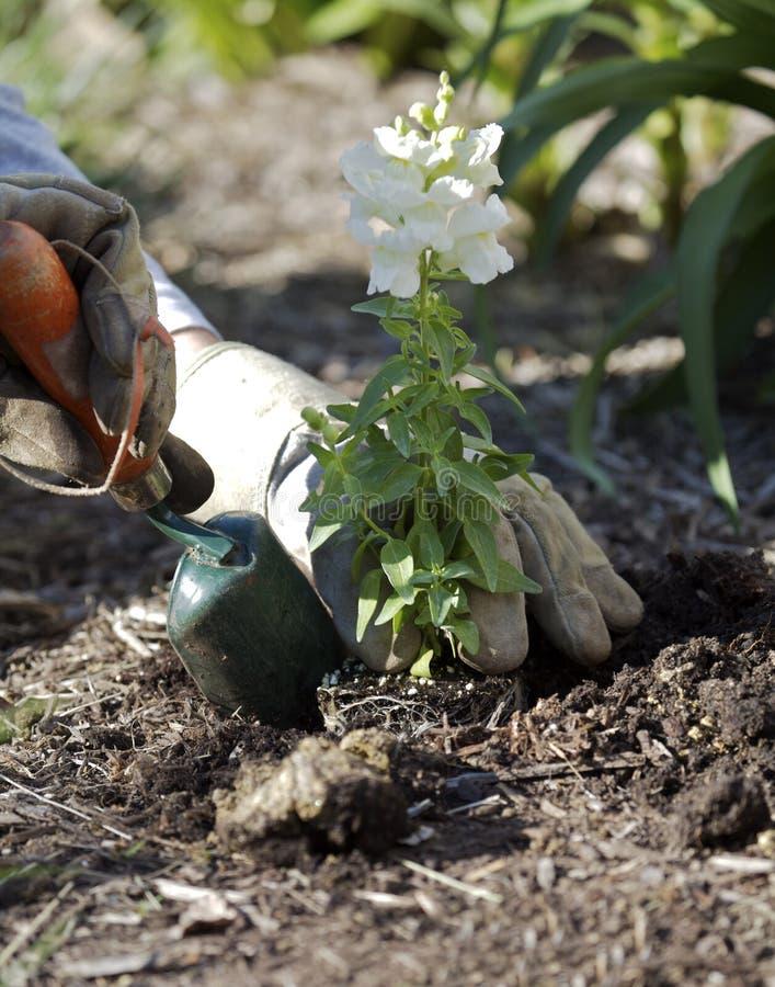 gardening στοκ φωτογραφίες με δικαίωμα ελεύθερης χρήσης