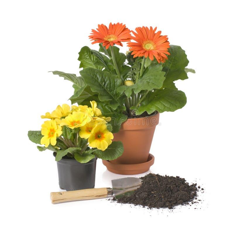 Free Gardening Stock Images - 8840714