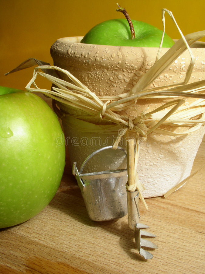 Gardening: apples stock image