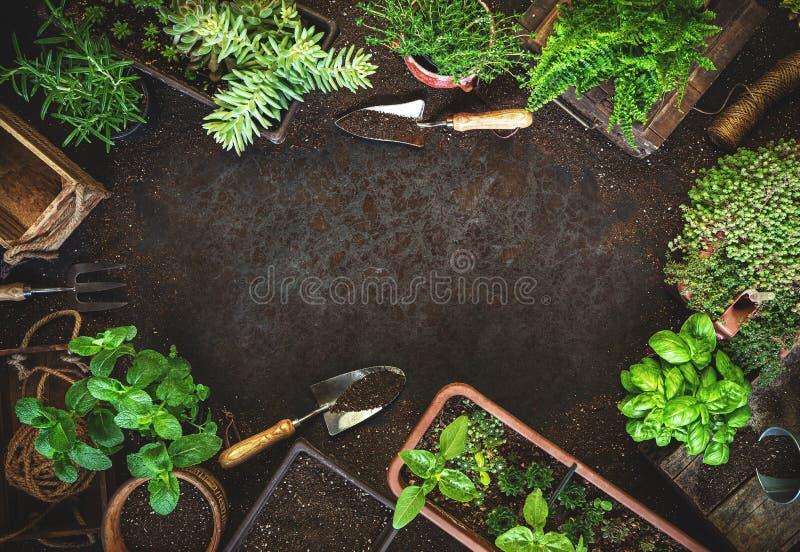 Gardening background with garden tolls stock image