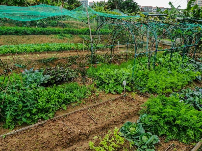 An organic farm on the Lantau Island, Hong Kong. Gardening beds in a small local organic farm royalty free stock photo