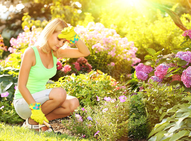 Download Gardening. Blonde Young Woman Planting Flowers In Garden Stock  Photo   Image: 57469348