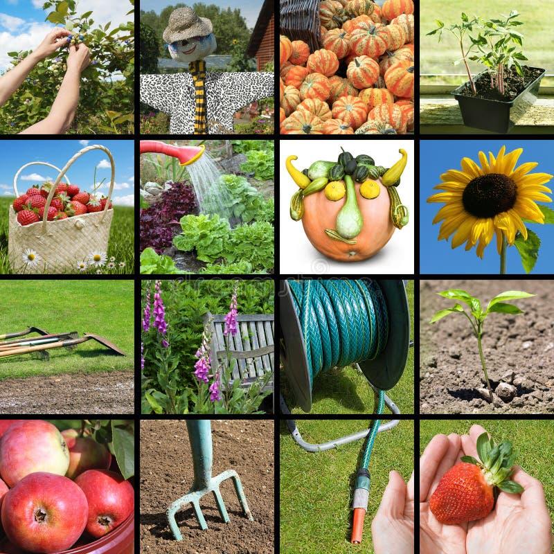 Free Gardening Collage Royalty Free Stock Photo - 40381935