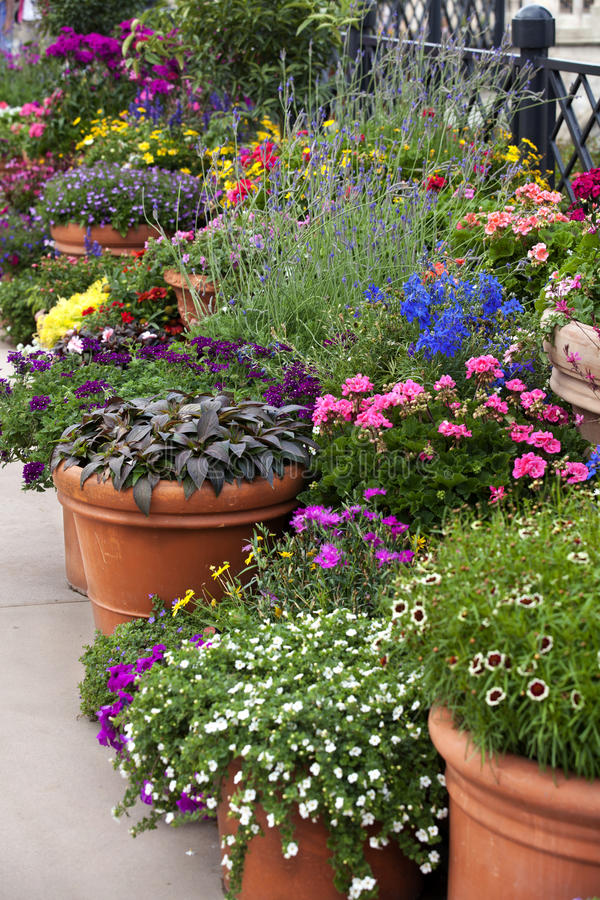 Flower Pot Gardening stock photography