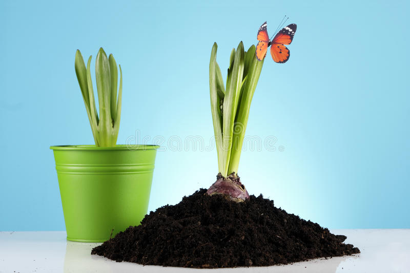 Download Gardening Concept! Royalty Free Stock Photos - Image: 18573448