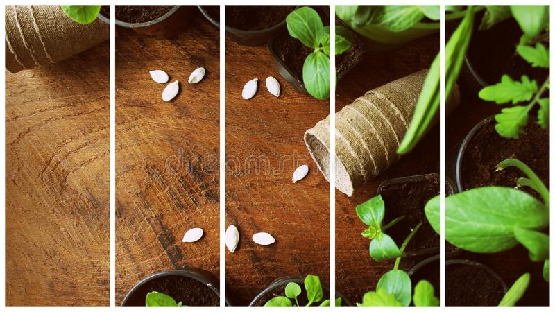 Gardening concept background with seedling and pots. Collage stock images
