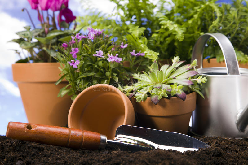 Gardening concept closeup royalty free stock photo