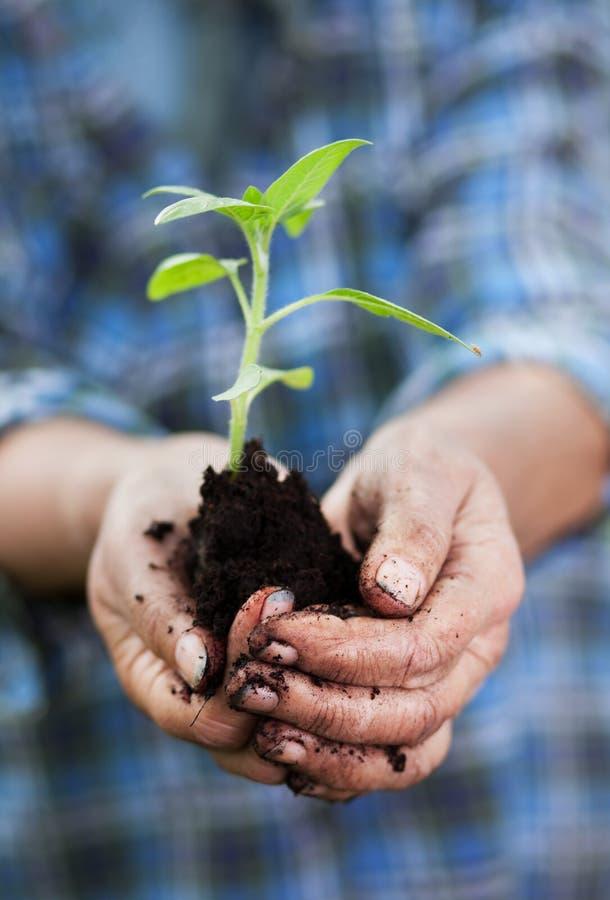 Download Gardening concept stock image. Image of hand, handful - 31218739