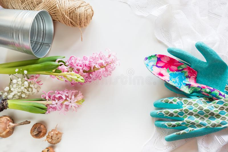 Gardening concept. Still life of seedling hyacinth, garden tools, scissors, twine, tubers-bulbs gladiolus with copy space. Top vie. W. Spring background stock photo